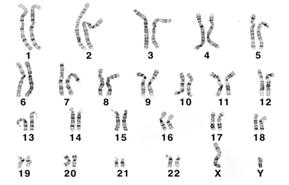 染色体一覧